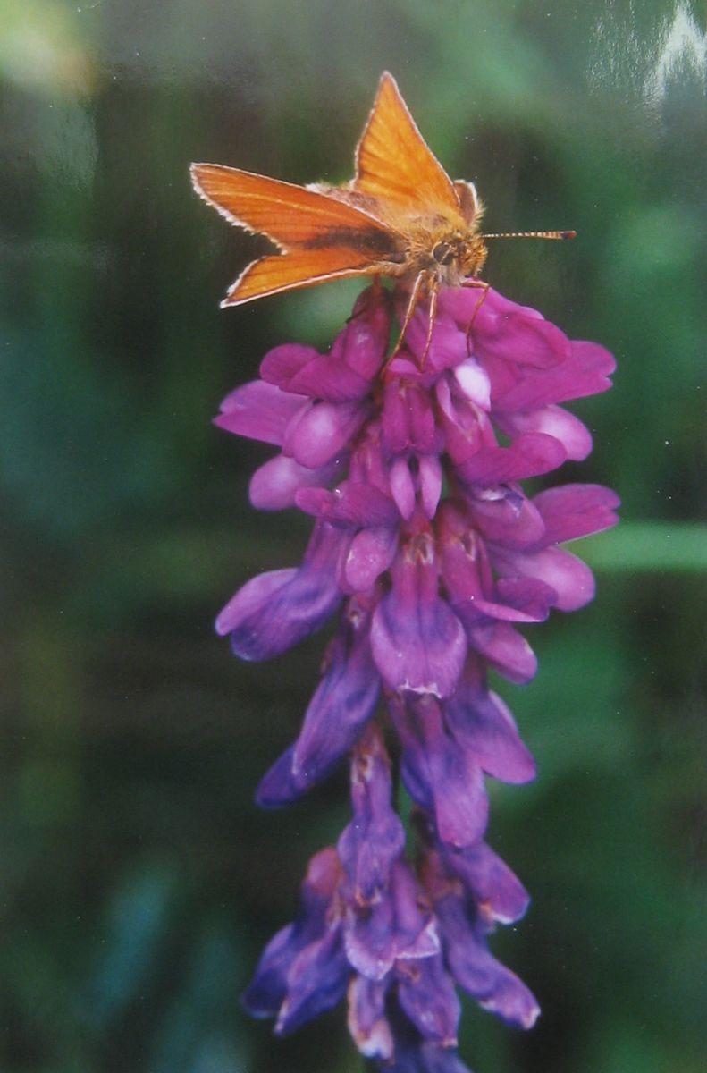 Hot moth