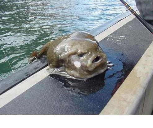 ugly fish.jpg